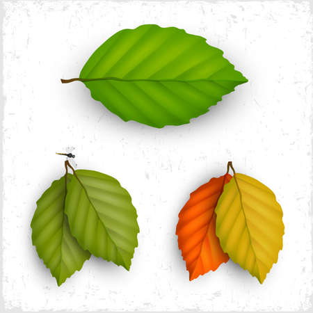 Vector set of leaves Vector