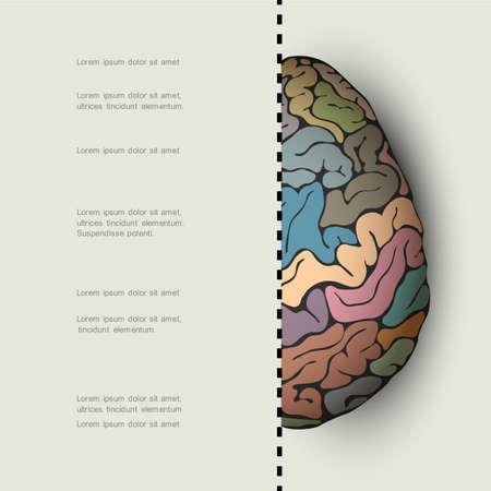 Concept of human brain. Vector illustration