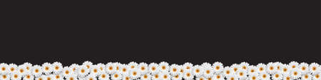 chamomiles: Stylish Border with White Flowers chamomiles on black. Floral Summer Banner. Vector illustration