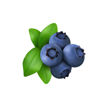 Blueberry with leaves  isolated on white background. Realistic Vector illustration