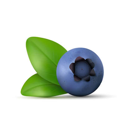 ripe: Blueberry isolated on white background. Realistic Vector illustration