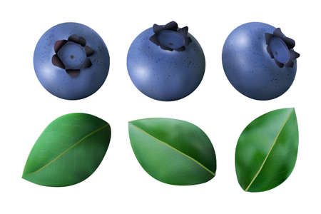 Set of Blueberries and leaves isolated on white background. Realistic Vector illustration