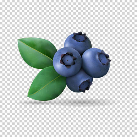 Blueberry with leaves isolated on transparent background. Realistic Vector illustration Vettoriali
