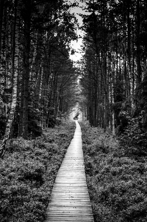 A wooden path in park