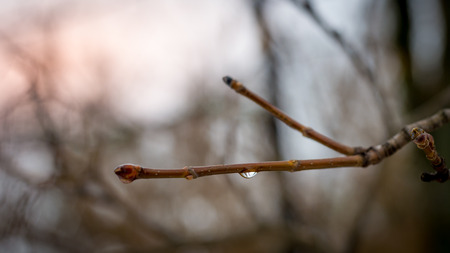 A water drop on a small branch in winter with beautiful orange sky in background