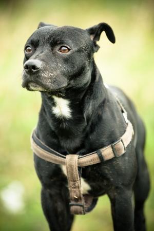 dog park: Black dog