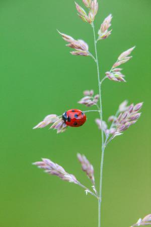 芝生の上のてんとう虫のビンテージ写真