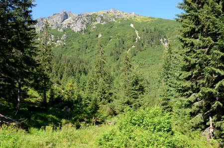 tatras: Mountain forest (Tatras)