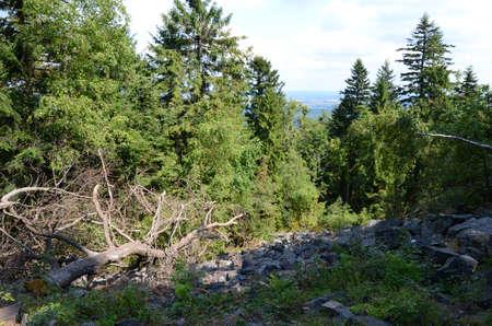gory: Mountain foresta (Gory Santacroce in Polonia) Archivio Fotografico