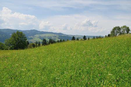 prato montagna: Prato della montagna Archivio Fotografico