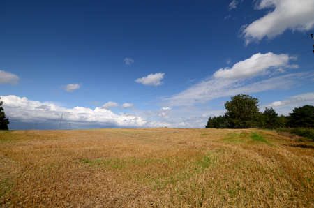 beheaded: Harvested field, stubble under a blue sky Stock Photo