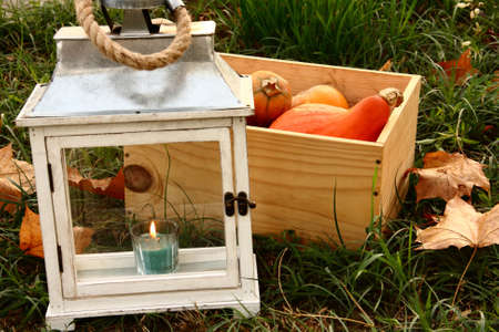 pumpkins in the chest on grass and lamp
