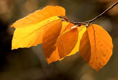 Autumn Leaves Stock Photo - 1185915