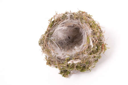 Birds nest on white photo