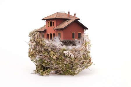birds nest: Bird withe nido en la casa blanca  Foto de archivo