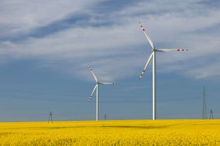protected plant: Wind turbines on a rape meadow (Poland) Stock Photo