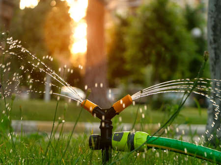 Watering the lawn with an automatic irrigation system at sunset. Lawn care and gardening concept.