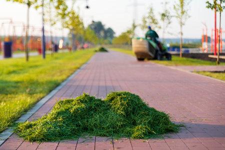 Gardener trims the lawn in public park leaving heaps of freshly cut grass.