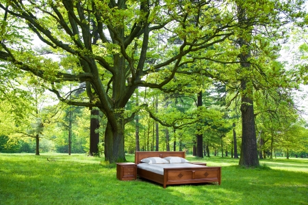 bed in a forest- concept of good sleep Stockfoto