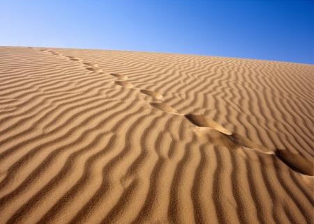 Sandy desert, Sahara, Tunisia