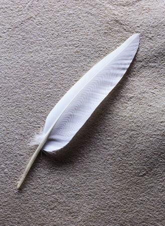 pluma blanca: Pluma blanca Foto de archivo