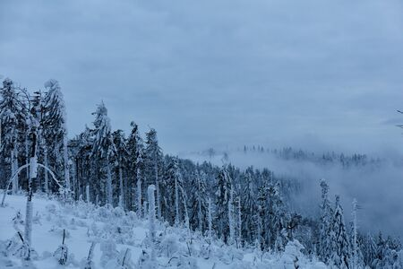 Snow-covered forest on the hillside. Winter mountain landscape.