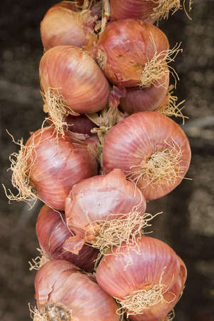 braid of onions at the open market