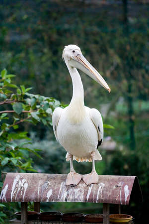pelican on the roof of a bird feeder Stock Photo