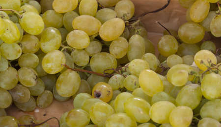 Grapes, for image backgrounds or food illustration Stock Photo