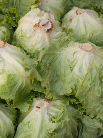 Lettuce, for image backgrounds or food illustration Stock Photo