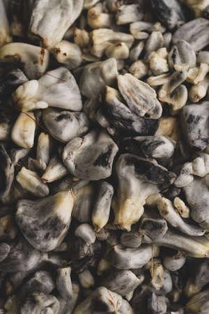 Macro close up of Huitlacoche corn edible fungus, traditional mexican dish, selective focus
