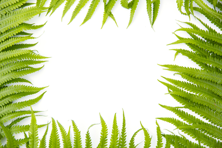 Fern polypody adders tongue plant as frame on white background, space for text, nature greeting card
