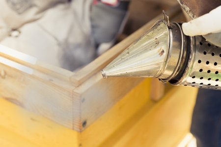 Beekeeper is working with bees and beehives on the apiary.Bee smoker is used - beekeepers tool to keep bees away from hive Stock Photo