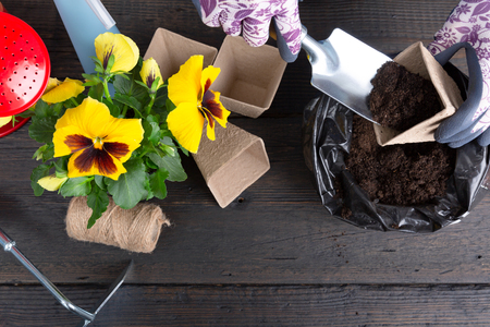 Hands of gardener woman putting soil into a paper flower pot. Planting spring pansy flower. Gardening concept Stok Fotoğraf