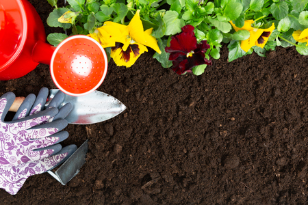 Gardening tools on soil background. Planting spring pansy flower in garden. Spring garden work concept