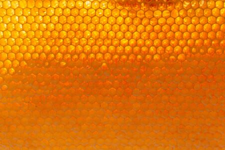 Closeup of honey bee cells background 版權商用圖片