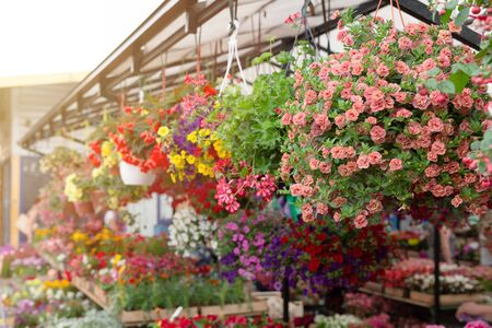 Variety of plants and flowers at local city flower market, Riga, Latvia