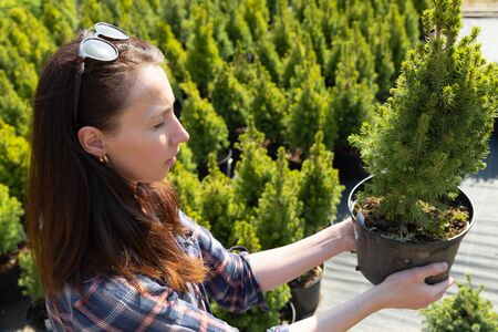 woman choosing coniferous tree at outdoor plant nursery Standard-Bild