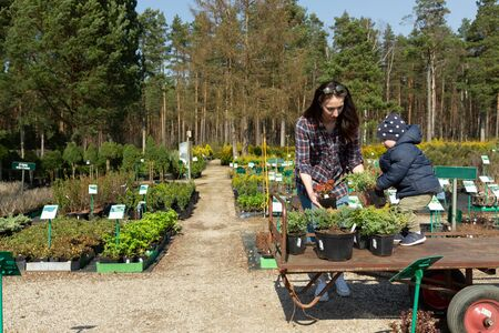 Young mother and child buying flowers and trees for garden. Standard-Bild