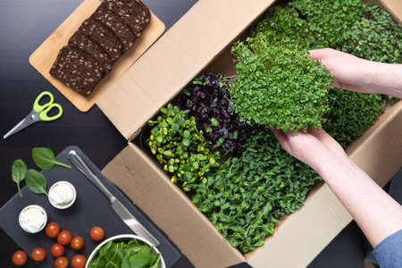 Organic raw microgreens - Top view of a women picking up a container of superfood sprouts out of a cardboard box filled with multiple sprouts. Healthy eating concept.