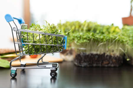 Healthy food online ordering concept. Microgreens and shopping cart full of cutted sprout superfood.