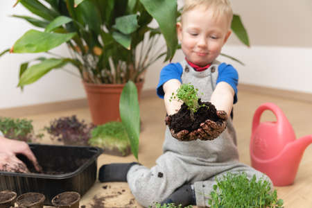 Growth at home gardening and learning botany concept. Young boy proudly holding seedlings and soil in hands. Stockfoto