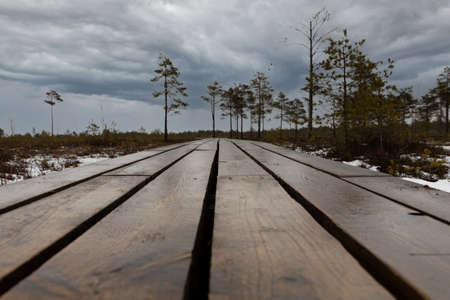 Close up of wooden pathway in a swamp with small trees and dramatic sky.