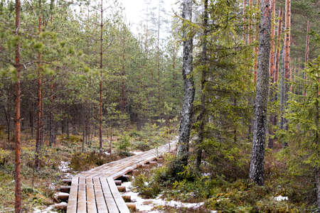 View of woods in a natural park with wooden pathway.