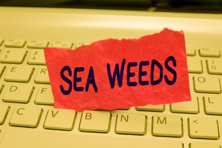 Writing note showing Sea Weeds. Business photo showcasing Large algae growing in the sea or ocean Marine plants flora. Stock Photo