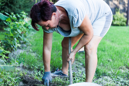 A brunet woman working hard on the vegetable garden. The gardener busy cultivating the topsoil. Preparing the backyard for planting crops. Organic farming concept
