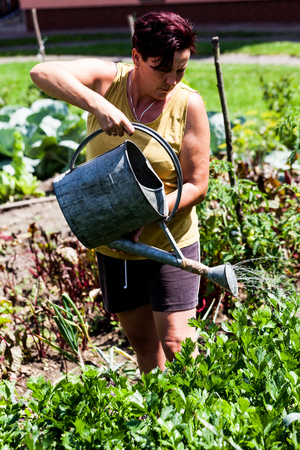 A view of a woman holding a metal bucket. The gardener working hard watering the vegetables at the garden. Backyard homegrown farming activity. Countryside lifestyle scenario