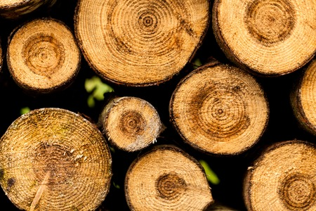 Sawed tree trunks and branches in different sizes, piled up in blue container Wood storage industry. Background of dry chopped firewood logs stacked up on top of each other in a pile.