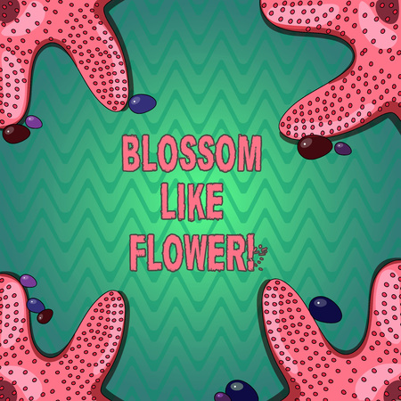 Handwriting text writing Blossom Like Flower. Concept meaning plant or tree that will form the seeds or fruit Starfish photo on Four Corners with Colorful Pebbles for Poster Ads Cards 免版税图像