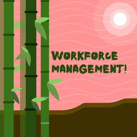 Text sign showing Workforce Management. Business photo text use to optimize the productivity of its employees Colorful Sets of Leafy Bamboo on Left Side and Moon or Sun with Round Beam